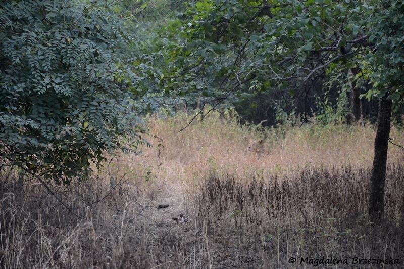 Gdzie jest lew? Kto wie? ©Magdalena Brzezińska
