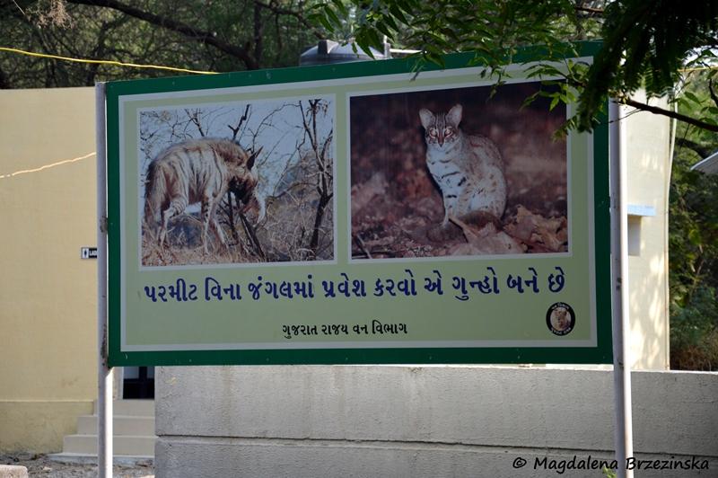 Przy dopisującym szczęściu można w parku Gir spotać takie zwierzęta ©Magdalena Brzezińska
