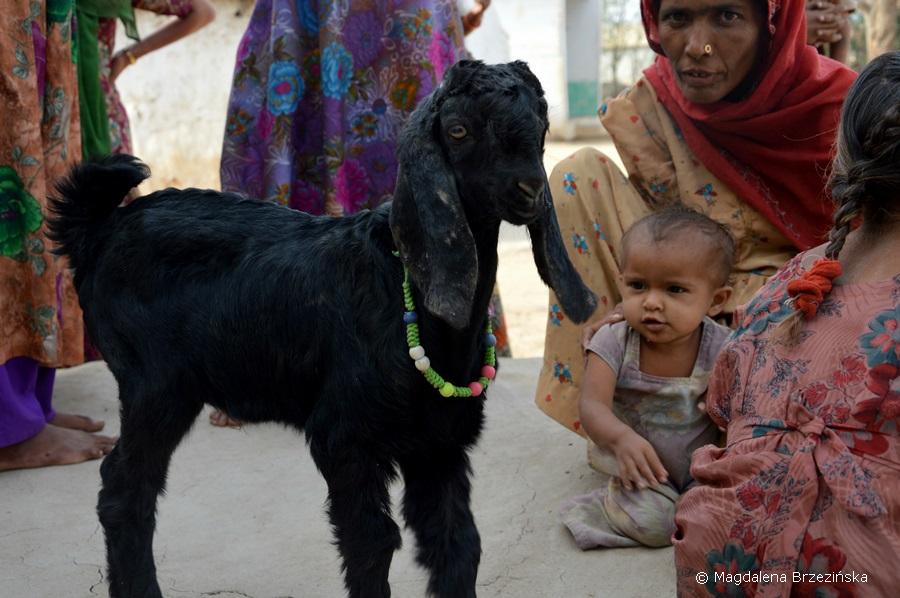 Kutch, Indie 2015 © Magdalena Brzezińska