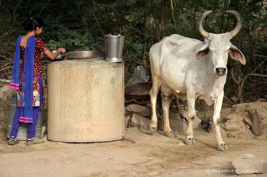 Kutch, Indie 2015 © Magdalena Brzezińsk