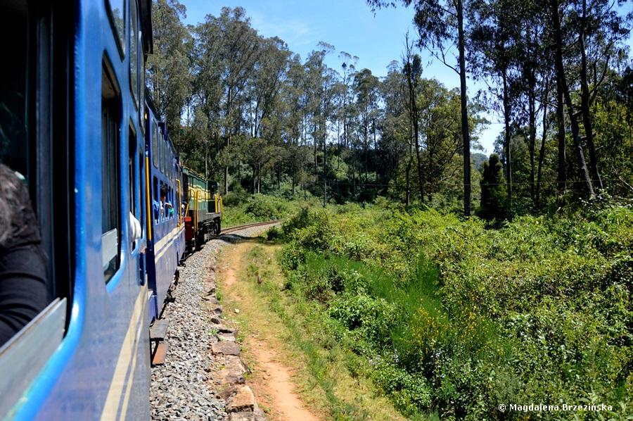 Nilgiri Mountain Railway, Tamil Nadu, Indie 2016 © Magdalena Brzezińska